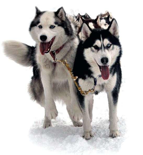 Камчатка #моякамчатка #kamchatka #photo #photooftheday #hasky #хаски #лайка #лайкнилайку #щенок #dog #фотодня #like